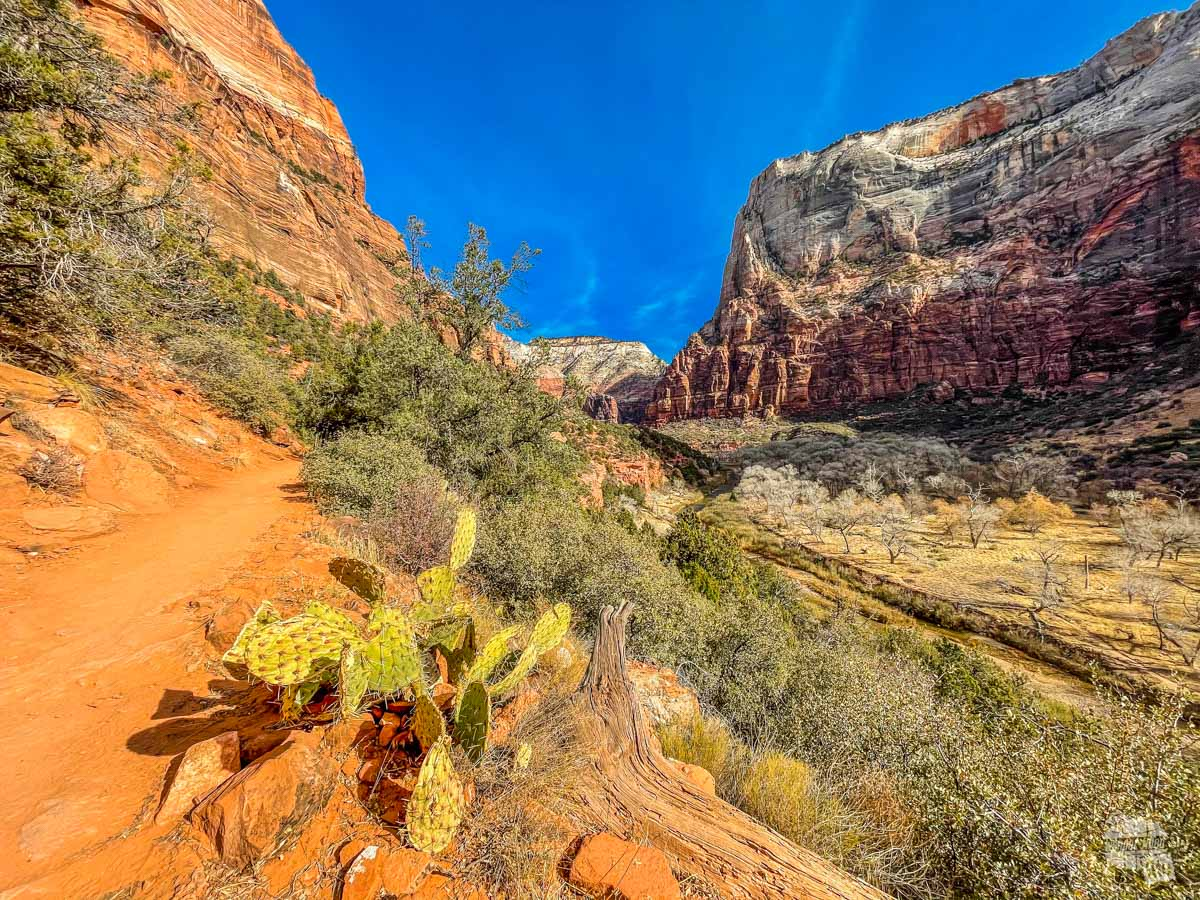 Kayenta Trail in Zion National Park.