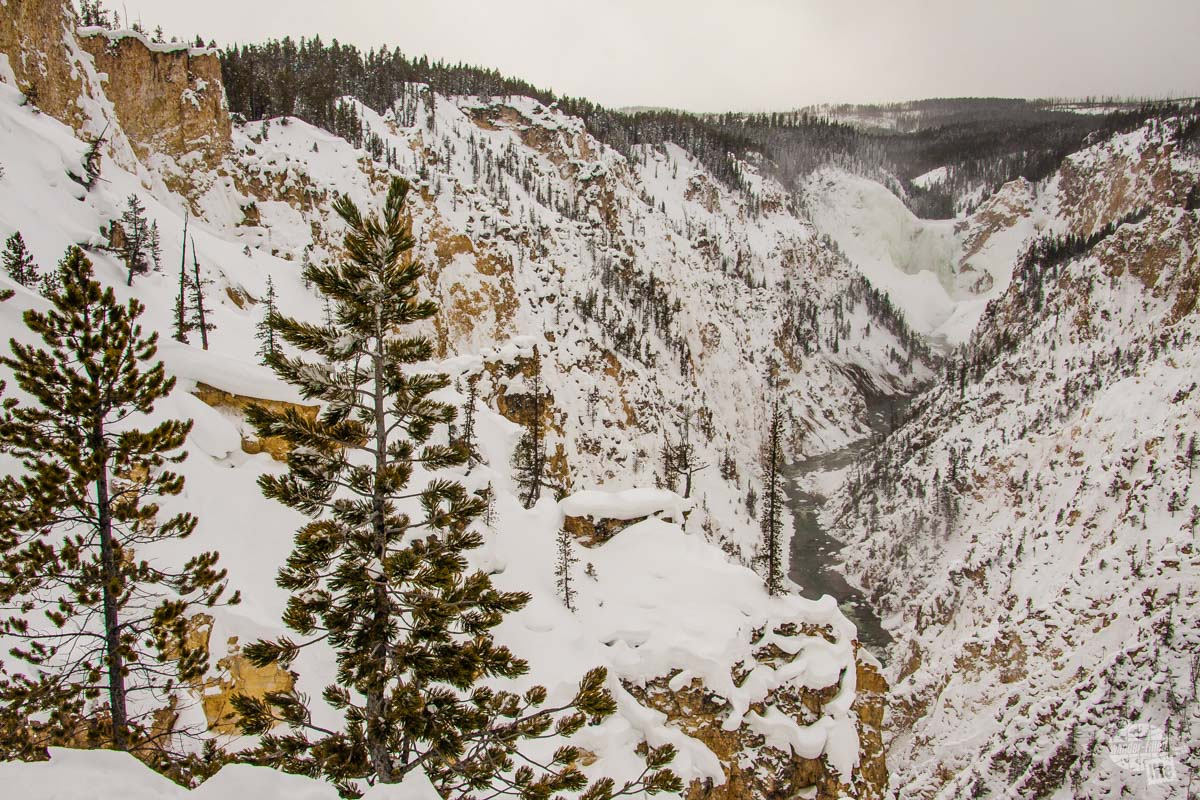 Grand Canyon of the Yellowstone in the winter.