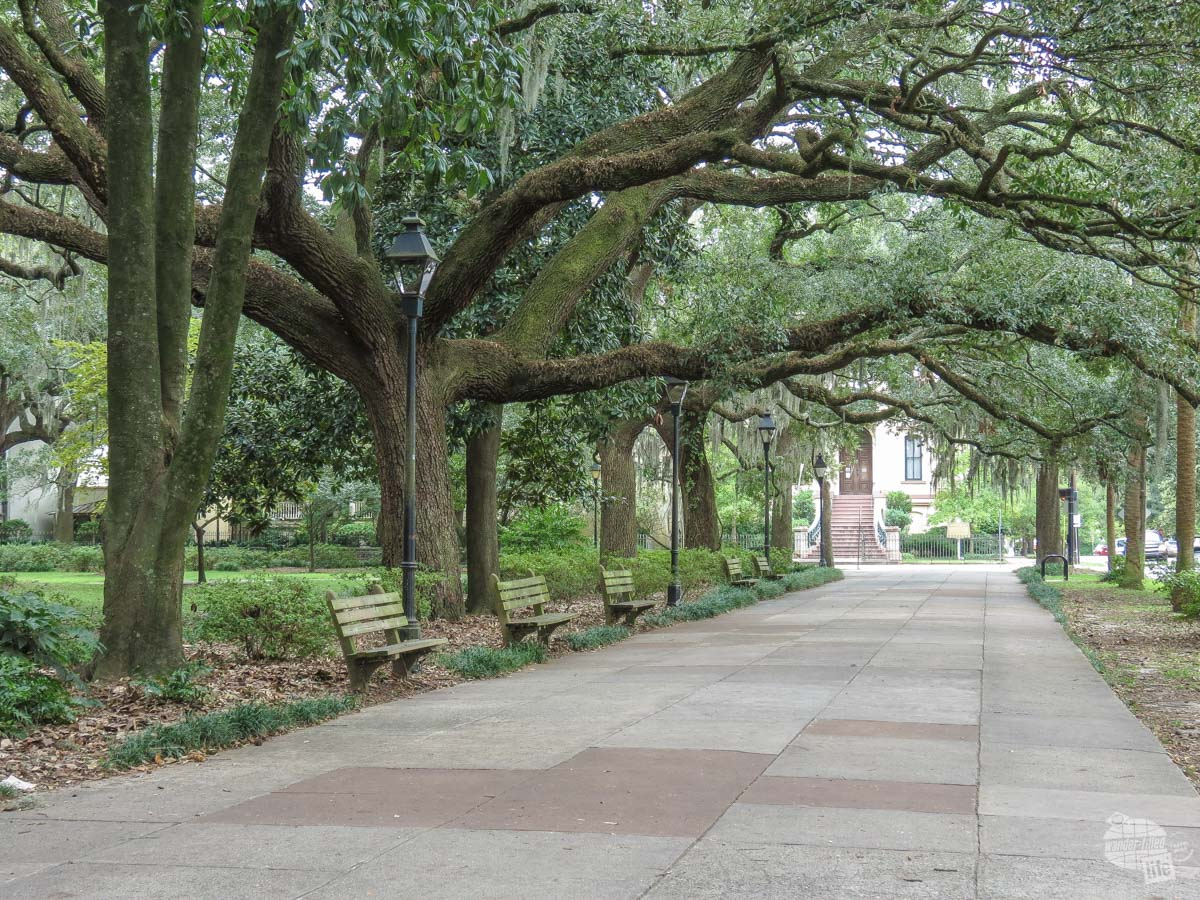 Oak trees along a street in Savannah, GA