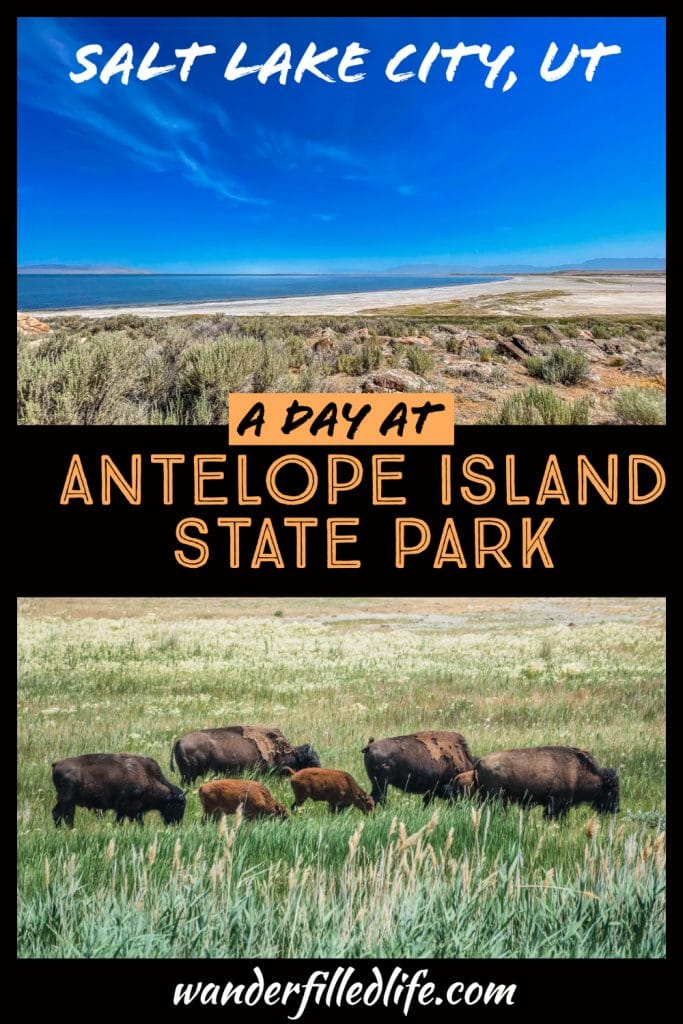 Antelope Island State Park in Utah is a rugged, beautiful area, with a lot of history and, most importantly, a large herd of bison!