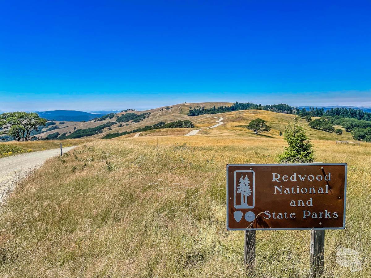 Bald Hills Road at Redwood National Park