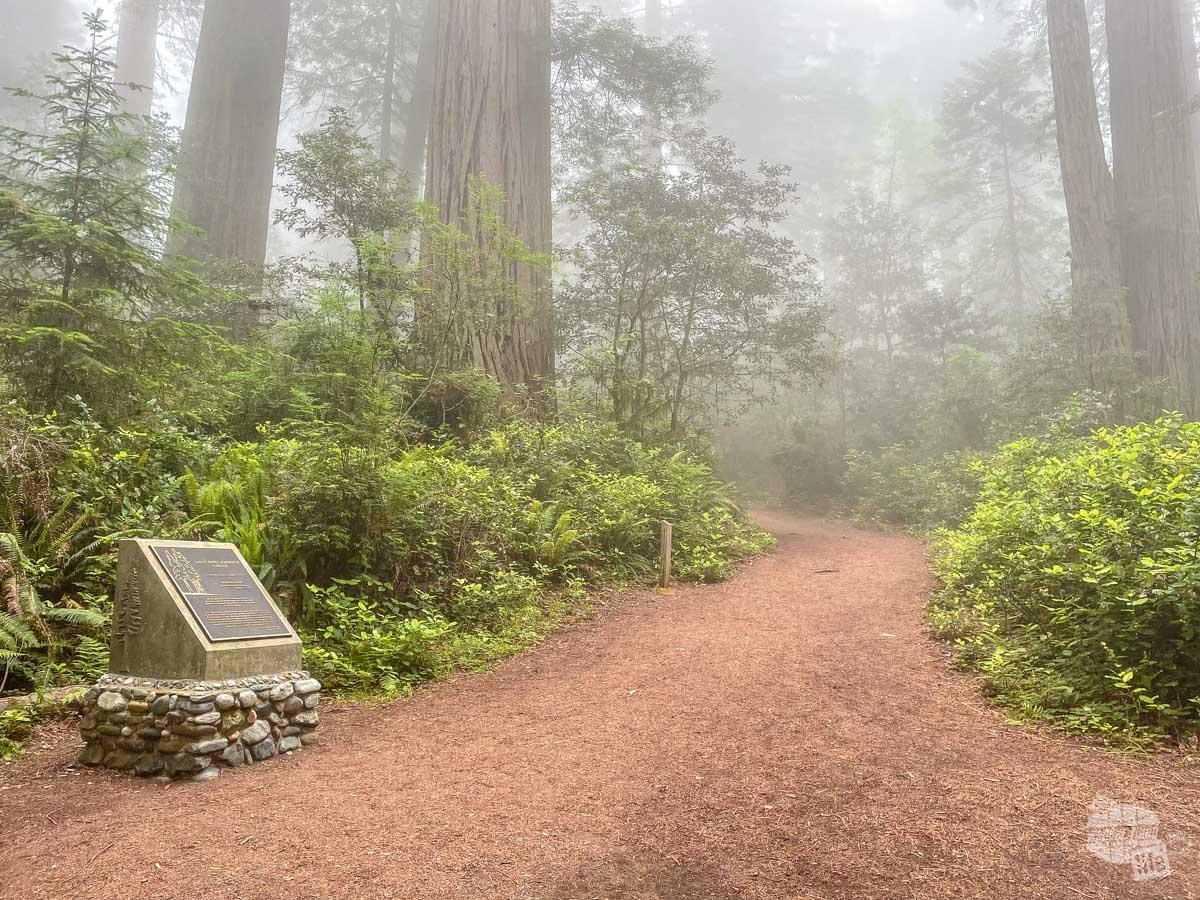 Lady Bird Johnson Grove of Redwoods