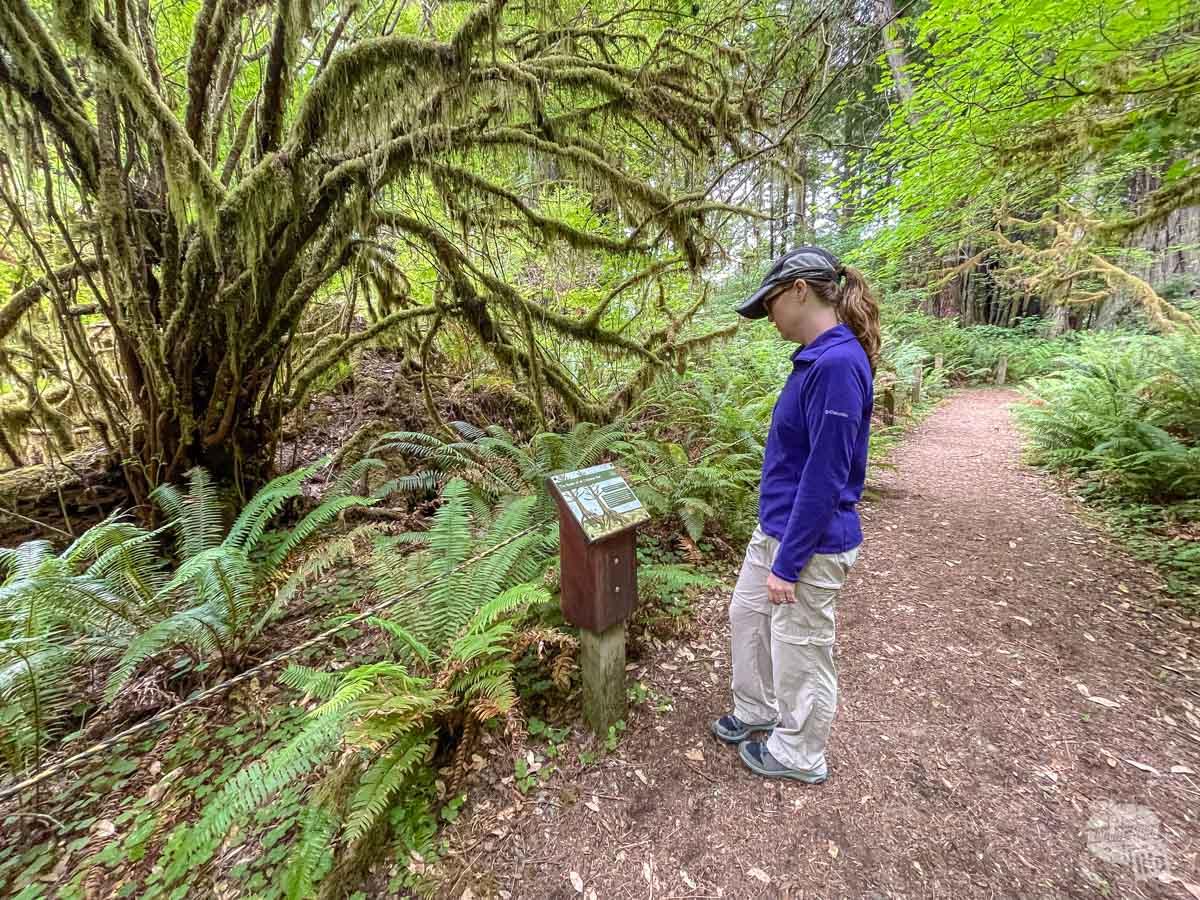 Revelation Trail at Redwood National Park.