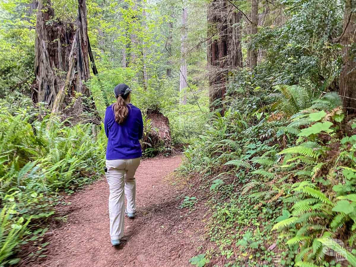 Cool temperatures at Redwood National Park.