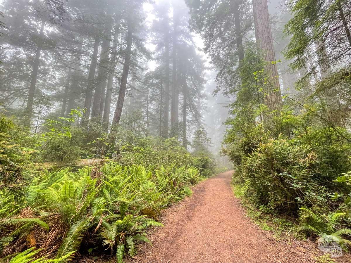 Lady Bird Johnson Grove at Redwood NP.